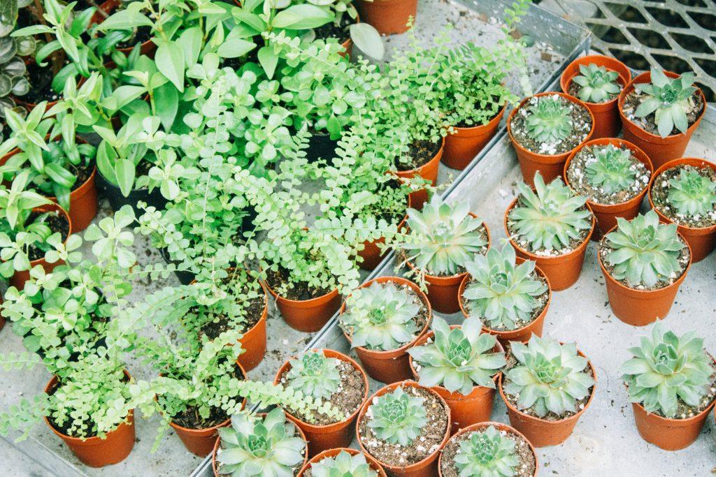 Plantas verdes en macetas